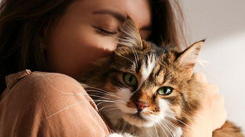 10 Dinge, mit denen du die Gesundheit deiner Katze gefährdest - Foto: undefined undefined/iStock