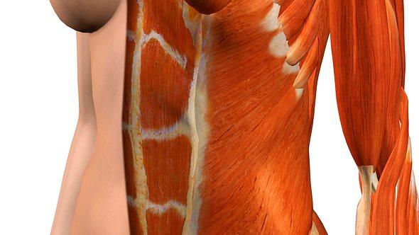 Mehr Muskeln gibt es mit den Bauch-weg-Geräten. - Foto: Hank Grebe/istock