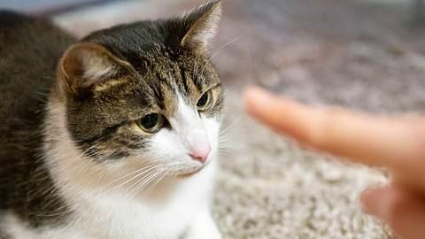 Bei der Erziehung von Katzen kann man einiges falsch machen. - Foto: spooh/istock