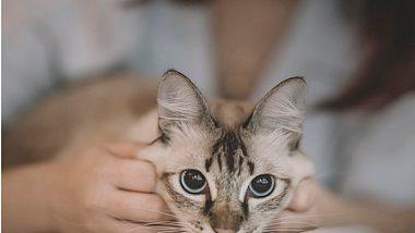 5 Tipps, wie du die beste Freundin deiner Katze wirst - Foto: Istock/chee gin tan