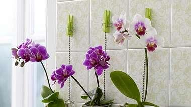 944329 orchideenindrahtkoerbchenx800