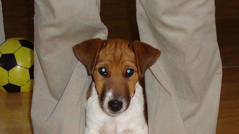 ali parson russel fox terrier mix - Foto: privat