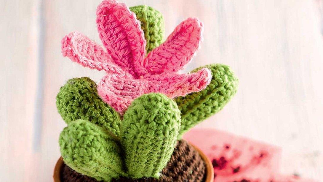 Kleiner Kaktus, große Blüte und garantiert keine Verletzungsgefahr. - Foto: frechverlag