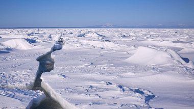 In der Antarktis ist es so warm wie noch nie! - Foto: iStock