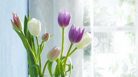 baender basteln diy tulpen - Foto: deco&style
