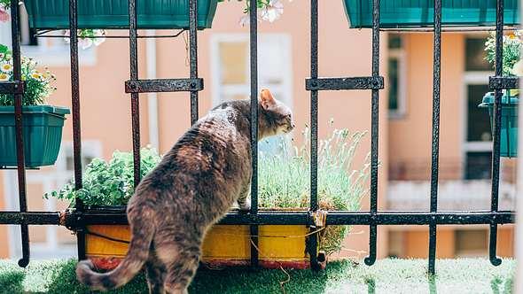 Mit ein paar einfachen Tricks bekommst du einen katzensicheren Balkon. - Foto: VioletaStoimenova/ iStock