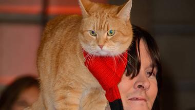 Kater Bob wurde laut seines Besitzers 14 Jahre alt. - Foto: imago images / i Images