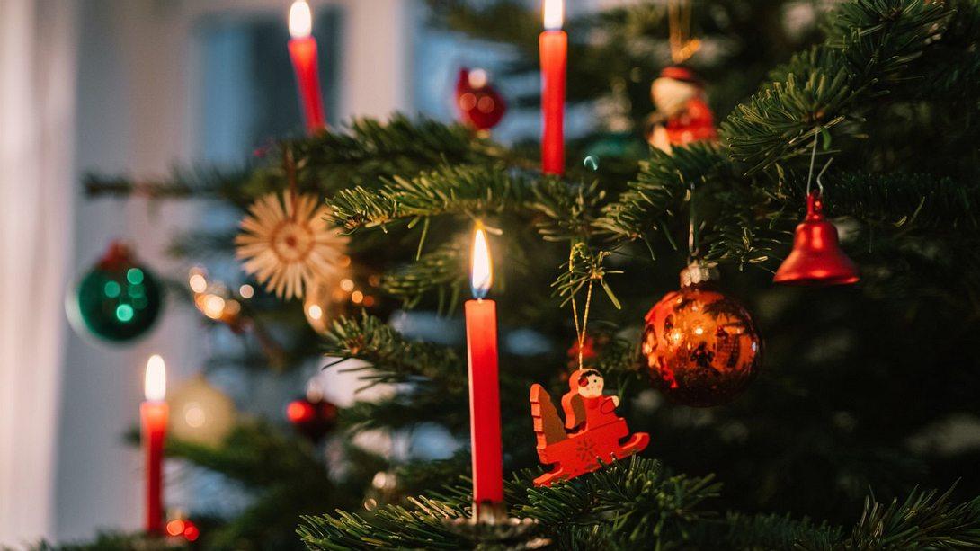 Bis zu 25.000 Insekten: Dein Weihnachtsbaum lebt - Foto: iStock/golero
