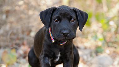 In Österreich wurde ein blinder Hund im Wald zurückgelassen. - Foto: Mexitographer/istock