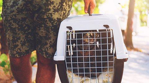 Bremen: Ein Mann warf eine Katze in einer Kiste in den See (Symbolbild) - Foto: batuhan toker/iStock