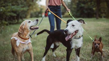 Bundesregierung plant Gassi-Zwang - Hunde müssen 2 Mal am Tag raus - Foto: iStock/svetikd