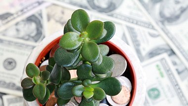 Der chinesische Geldbaum für dein Geldglück - Foto: iStock/Orchidpoet