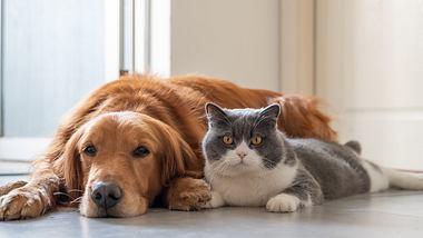 Auch Hunde und Katzen können Corona bekommen. - Foto: istock/chendongshan