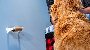 Viele Hunde folgen ihrem Herrchen sogar bis zum Klo. - Foto: cmannphoto/istock