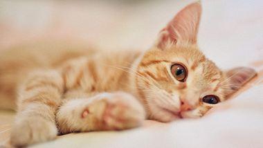 Deine Katze ist depressiv? Das kannst du tun - Foto: iStock/RalchevDesign