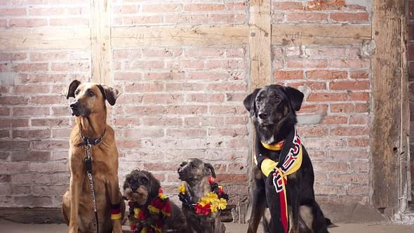 Die beliebtesten Hunderassen in Deutschland - Foto: IMAGO / Imagebroker
