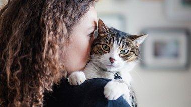 Diese Katze passt zu dir. - Foto: iStock