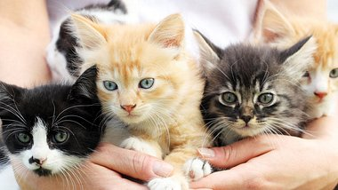 Die süßesten Disney Katzennamen für deine Samtpfote - Foto: skynesher/iStock