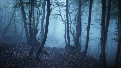 Frau verfährt sich im Wald. - Foto: den-belitsky/iStock
