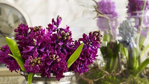 fruehlingsdeko mit hyazinthen - Foto: deco&style