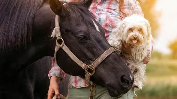 Wir verraten dir, welches Haustier am besten zu deinem Sternzeichen passt. - Foto: iStock/wernerimages