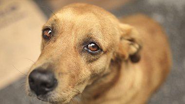 Bei der Hundeerziehung sollte auf Details geachtet werden. - Foto: Istock/23ducu
