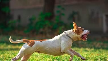 In Bielfeld hat ein Hund ein 10 Jahre altes Mädchen schwer verletzt. - Foto: Renato Arap/ istock