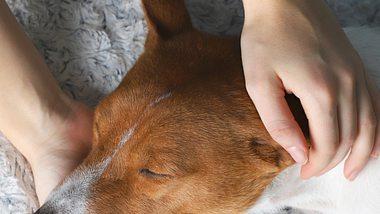 Ein Hund mit geschlossenen Augen wird von Händen gestreichelt - Foto: OlenaKlymenok/iStock