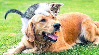 Hund und Katze aneinander gewöhnen: So werden Fellnasen zu besten Freunden - Foto: bluecinema/iStock