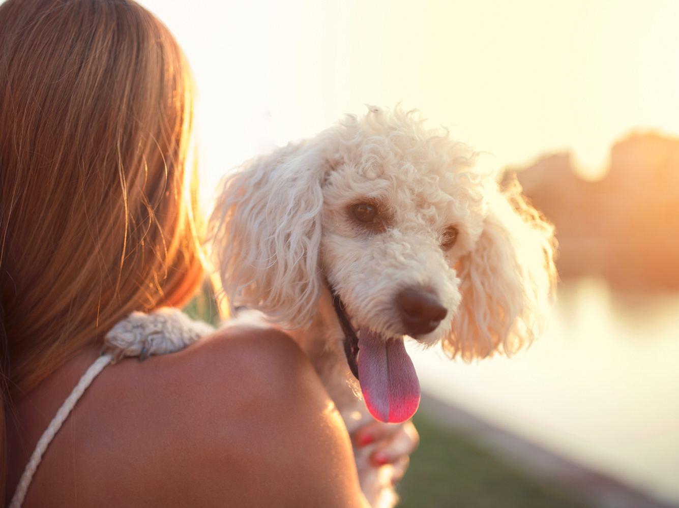 Hunde, die nicht haaren: Diese 10 Hunderassen verlieren kaum Fell