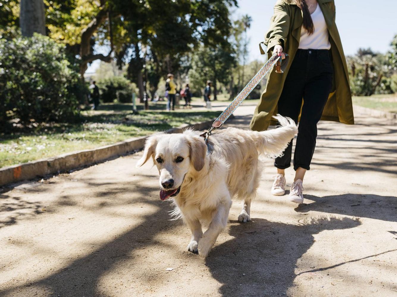 Hunde-Führerschein soll Pflicht werden: Dieses Bundesland macht ernst!