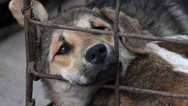 Das umstrittene Hundefleisch-Festival ist am Wochenende gestartet. - Foto: imago images / China Foto Press