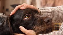 Hundejahre in Menschenjahre umrechnen: so alt ist dein Hund wirklich