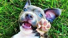 Die 25 schönsten und süßesten Hundenamen für Welpen - Foto: iStock