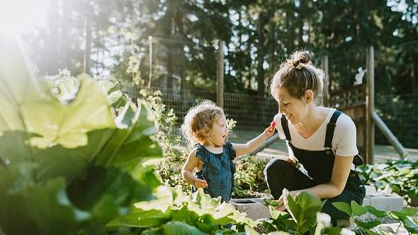 Sommer im Garten: Die besten Tipps für dich und die Familie - Foto: iStock/ RyanJLane