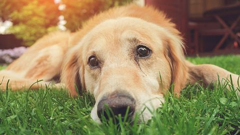 Nimm Dir jeden Tag ganz bewusst Zeit für Deinen Hund, damit Du nicht in seine traurigen Augen schauen musst. - Foto: iStock