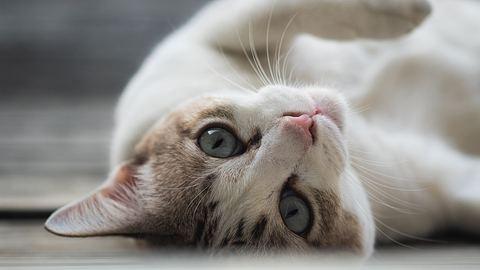 Darum stupst dich deine Katze mit der Nase an. - Foto: quantum40/istock
