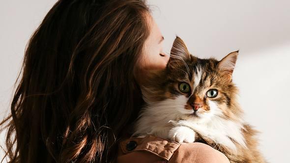 Katzen für Allergiker: 7 Katzenrassen, mit denen du trotz Allergie kuscheln kannst - Foto: undefined undefined/iStock