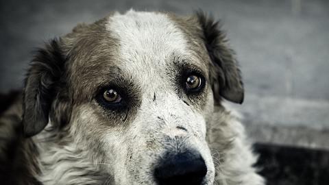 In Thüringen wurde ein Hund von drei kleinen Kinder gequält. - Foto: THEPALMER/istock