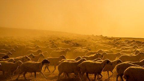 Bekommen wir bald Temperaturen wie in Australien? Laut Ergebnissen einer Studie zum Klimawandel sieht es 2050 danach aus. - Foto: CihatDeniz/Istock