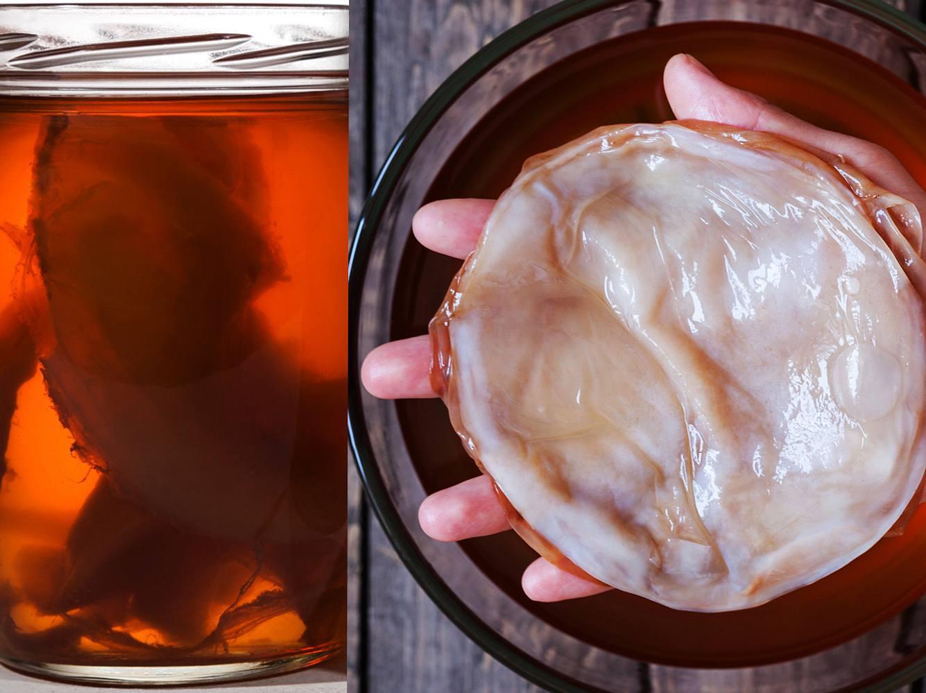 Kombucha Tee-Pilz: Zubereitung