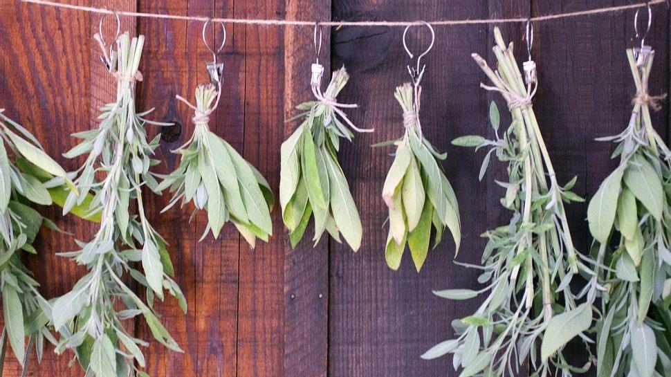 Kräuter trocknen: Lavendel, Rosmarin und Salbei. - Foto: Lara Hata/iStock
