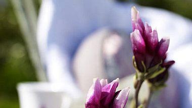 magnolie deko - Foto: deco&style