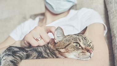 Unter den Haustieren sollen Katzen besonders gefährdet sein, was eine mögliche Corona-Infektion angeht. - Foto: istock/gesrey