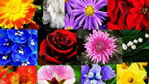 Die Blume deines Geburtsmonats verrät deine Persönlichkeit - Foto: iStock