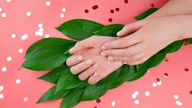 Gepflegte Hände - mit einem guten Nageletui ganz einfach - Foto: iStock/ Julia Klintsova