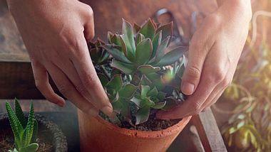 Diese Pflanzen sind ein Muss in jedem Schlafzimmer! - Foto: iStock