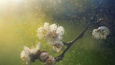 Dieses Jahr wird besonders schlimm: In unserer Pollenflug-Vorhersage 2020 sagen wir dir, wann welche Pollen Saison haben. - Foto: iStock / mammuth
