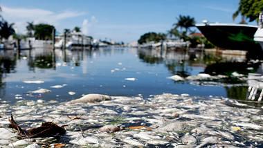 Red Tide Florida - Foto: Octavio Jones/Getty Images