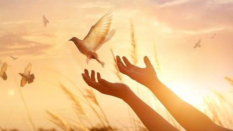 So findest du dein persönliches Seelentier! - Foto: ipopba/iStock